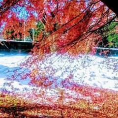 フォロー大歓迎/ペット/ペット仲間募集/犬/わんこ同好会/おでかけ/... 鬼怒川に雪が❄️紅葉と雪のコントラスト美…(2枚目)