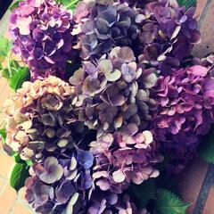 梅雨 紫陽花の剪定 来年も咲きますように✨
