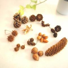 木の実/松ぼっくり/どんぐり/くるみ 松ぼっくり、くるみ、八角、どんぐり、綿の…