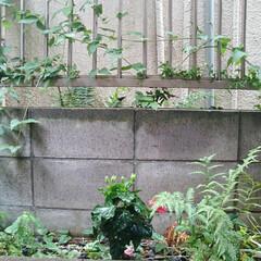 日本庭園/住まい 窓から見た庭