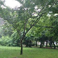 木場公園 癒される木場公園🌿🌿(9枚目)