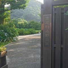 ガーデニング/日本庭 日本庭