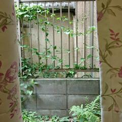 日本庭/ガーデニング 窓から見た庭