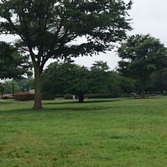 木場公園 癒される木場公園🌿🌿(3枚目)