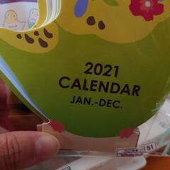 フォロー大歓迎/インコ/ダイソー 今年も出ました😊インコの来年のカレンダー😍