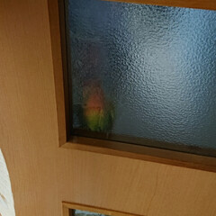 小桜インコ/フォロー大歓迎/LIMIAペット同好会/うちの子ベストショット お風呂行く為リビングから出たらドアに、し…(5枚目)