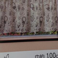 フォロー大歓迎/カフェカーテン/インコ柄 買い物に行ってて、たまたま見つけたインコ…