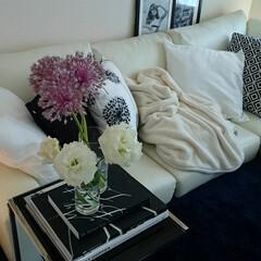 エレガント/モダン/ホワイト/フレーム/本/トルコキキョウ/... お花がすきなので、 切り花をよく 飾って…