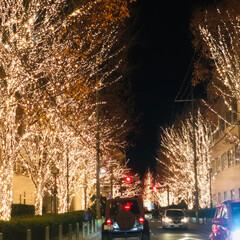 週末探索/風景/おでかけ/旅行 12月9日京都探索&イルミネーション 最…(3枚目)