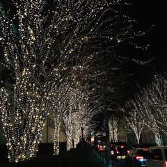 週末探索/風景/おでかけ/旅行 12月9日京都探索&イルミネーション 最…(9枚目)