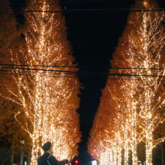 週末探索/風景/おでかけ/旅行 12月9日京都探索&イルミネーション 最…(2枚目)