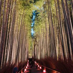 週末探索/風景/おでかけ/旅行 12月9日  京都探索&イルミネーション…