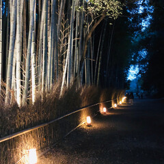 週末探索/風景/おでかけ/旅行 12月9日  京都探索&イルミネーション…(2枚目)
