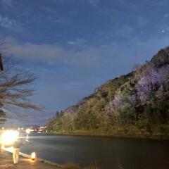 週末探索/風景/おでかけ/旅行 12月9日  京都探索&イルミネーション…(6枚目)