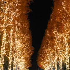 週末探索/風景/おでかけ/旅行 12月9日京都探索&イルミネーション 最…