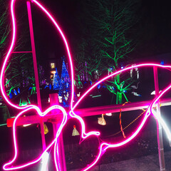 イルミネーション/フォロー大歓迎/冬/おでかけ/グルメ 今年最初のイルミネーション 神戸イルミナ…(6枚目)