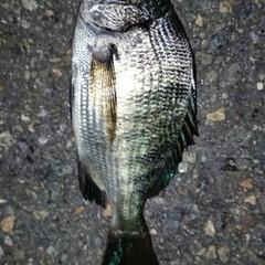 釣り 続けて魚釣りの写真でごめんなさいm(__…(2枚目)