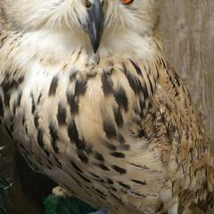 モフモフ/フクロウカフェ/鳥クラブ/エキゾチックアニマル フクロウカフェへ初めてお邪魔しました✨ …