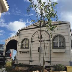 DIY/住まい/建築/物置 2カ月かけて自作した物置です〜 広さは3…