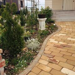 玄関アプローチ/ガーデニング/DIY/住まい/玄関/建築 今年は玄関前のレンガアプローチの横のガー…