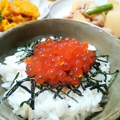 おうちごはん/至福のひととき/夕ご飯/いくら醤油漬け/自家製/はらこ/... 今年3度目のいくら♡  今年は鮭が不漁だ…