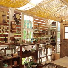 ターシャ/目隠し壁/ウッドデッキ/DIY/多肉植物/100均 大好きなターシャの家の窓をイメージしてd…
