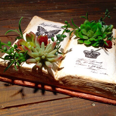モルタルブック/モルタル造形/雑貨/DIY/可愛い/雑貨だいすき 最近見たモルタル造形の作品が素敵だったの…