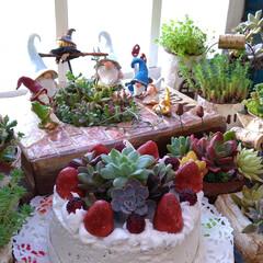 トムテ/多肉植物/多肉植物寄せ植え/モルタル造形/お気に入り/わたしのお気に入り 先日からハマっているモルタル造形&粘土細…
