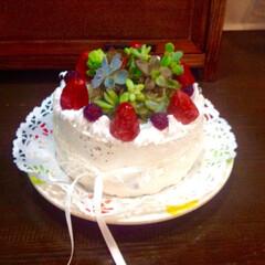雑貨/スイーツ鉢/モルタル造形/多肉植物/多肉植物寄せ植え/雑貨だいすき/... モルタル造形のスイーツ鉢です!ぱっと見美…