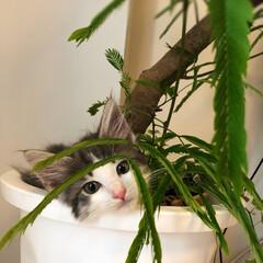 猫/ノルウェージャンフォレストキャット/ペット そんな場所に....😂