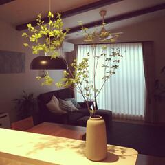 IKEA/勾配天井/二階リビング/観葉植物/ドウダンツツジ/インテリア/...