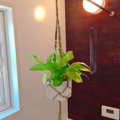 プラントハンガー/観葉植物/グリーン/DIY/100均/ダイソー/... 100均DIY☆ 麻ひもで手編みプラント…