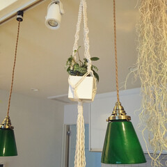 観葉植物/プラントハンガー/グリーン/DIY/100均/ダイソー/... 今度はダイソーの綿ロープでプラントハンガ…