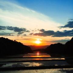 夕陽/田んぼ 水がはった田んぼ。夕陽が映って綺麗。癒さ…(1枚目)