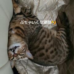 みんなハッピーに/ぶちゃいくな寝顔/ねこのきもち/ベンガル猫/エイト/かわいい息子 さぁ、週末金曜日‼️ エイトの寝顔を見て…