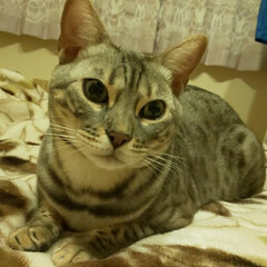 猫のいる暮らし/カイト/かわいい息子 ママといっしょにぼくもラジオきいてるにゃ😺
