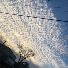 わんこ/雲 散歩してたらうろこ雲? なんかコワーイ(…