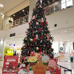 「もうクリスマス、はやいものですね~(>ω…」(1枚目)