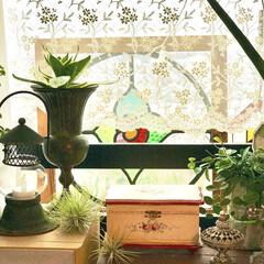 ステンドグラスパネル/エアプランツ/チランジア/雑貨/ハンドメイド 雑貨と植物のコラボが好きです