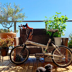 ベランダガーデン/マンションベランダ/トイプードル/愛犬/植物のある暮らし/ここが好き/... 空を独り占めできるすのこ敷きのベランダ💓(1枚目)