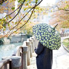 傘/デザイン/キウイ/果物/雨/雨の日 キウイ柄が絶妙にキュート!個性的な傘で雨…