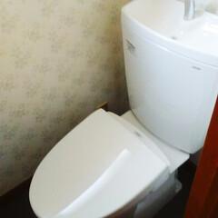トイレ/リフォーム/TOTO 青い古いトイレを白色の最新トイレに!