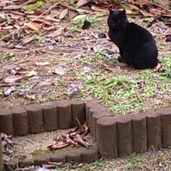黒猫 おそらく出会った頃は1歳にも満たなくまだ…