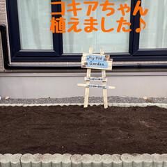 東京ラスク/バスキュー/コキア/ピーチネックレス 父の四十九日が無事終わりました。あっとい…(2枚目)