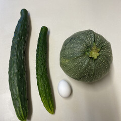 夏野菜/家庭菜園 左→畑で採れたオバケキュウリ🥒 真ん中→…