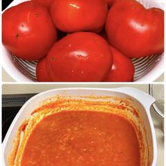 夏野菜/家庭菜園/お庭あそび 庭の家庭菜園で、トマトが食べ切れない程赤…