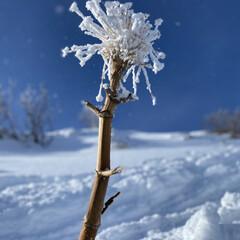 北海道/スキー/雪 上の娘がスキー⛷に行って、写真を送ってく…