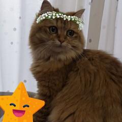 フォロー大歓迎/LIMIAペット同好会/にゃんこ同好会/うちの子ベストショット つぶちゃん、snowで遊ばれる(笑) 猫…(4枚目)