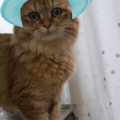 フォロー大歓迎/LIMIAペット同好会/にゃんこ同好会/うちの子ベストショット つぶちゃん、snowで遊ばれる(笑) 猫…(3枚目)