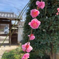 発見/自然/散歩 久しぶりに実家に帰省。庭が華やかになって…